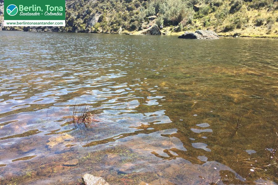 Agua cristalina de la laguna de cunta| Páramo Santurbán - Berlín, Tona - Santander Colombia